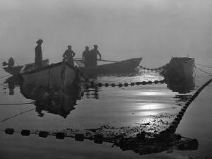 A Sardine Fleet Working Nets Off Eastport, Maine by Luis Marden