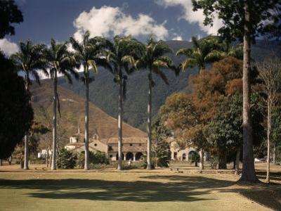 Palm Trees Line the Caracas County Club by Luis Marden