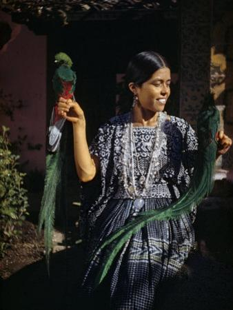 Woman Holds Mounted Quetzals, National Bird of Guatemala