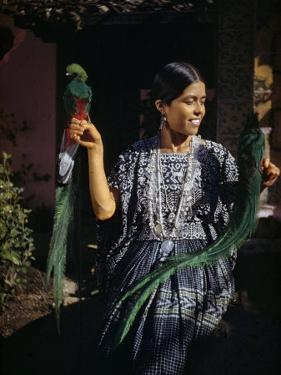 Woman Holds Mounted Quetzals, National Bird of Guatemala by Luis Marden