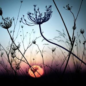 Silhouette Flower by Luis Mariano González