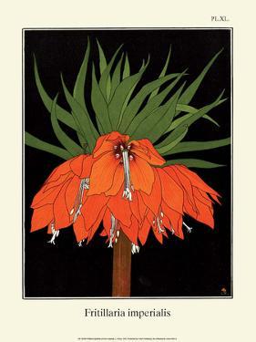 Botanical Print, Crown Imperial, 1905 by Luite Klaver