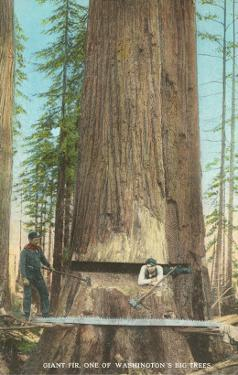 Lumberjacks Felling Fir, Washington