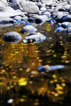 Trees Reflected in Water on the Banks of the River Orkla, Norway, September 2008 by Lundgren