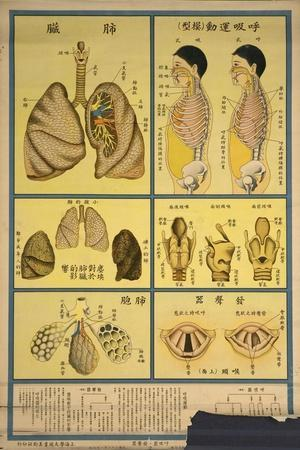 https://imgc.allpostersimages.com/img/posters/lung-anatomy-and-respiration_u-L-PWB8ZM0.jpg?artPerspective=n