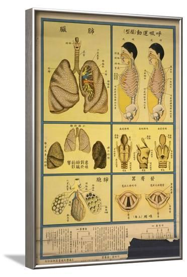 Lung Anatomy and Respiration--Framed Art Print
