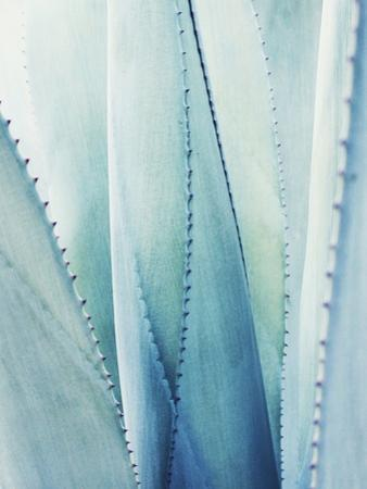 Pale Blue Agave No. 1 by Lupen Grainne