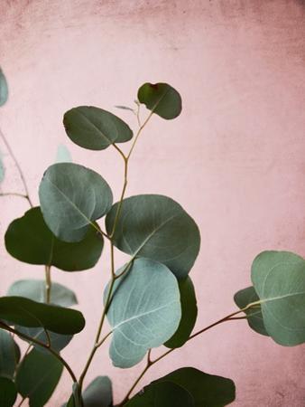Sage Eucalyptus No. 2 by Lupen Grainne