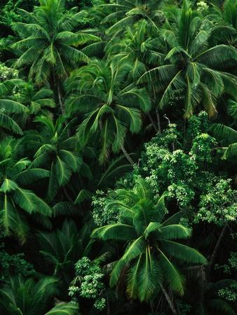 https://imgc.allpostersimages.com/img/posters/lush-plants-in-hawaiian-rainforest_u-L-PZKNPI0.jpg?p=0