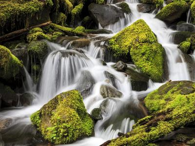 https://imgc.allpostersimages.com/img/posters/lush-waterfall-olympic-national-park-washington-usa_u-L-PHATPE0.jpg?p=0