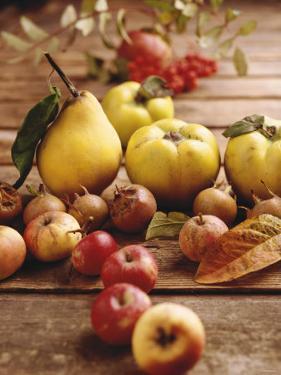 Autumn Fruits: Quinces, Medlars, Rowan Berries, Apples & Pears by Luzia Ellert