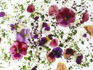 Edible Flowers and Sprouts by Luzia Ellert