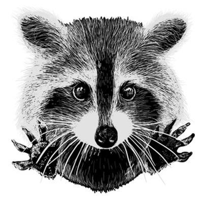 Hand Drawn Raccoon by LViktoria