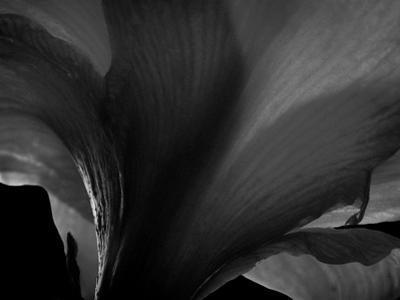 Amarilla by Lydia Marano