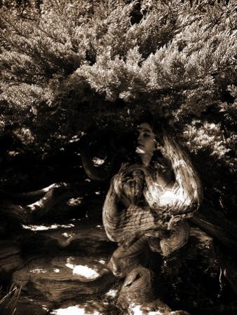 Dryad II by Lydia Marano
