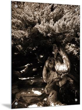 Dryad by Lydia Marano