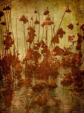 Golden Lotus by Lydia Marano