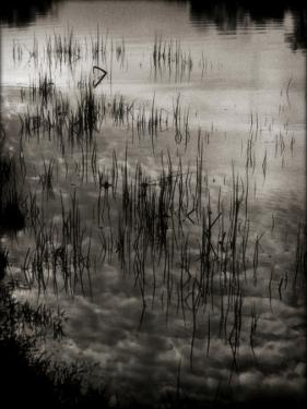 Reeds by Lydia Marano