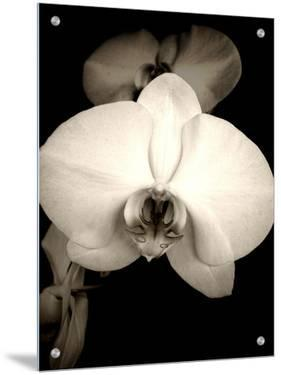 Sepia Orchid by Lydia Marano