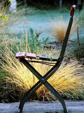 Chair (Bandstand) with Stipa Arundinacea (Pheasant Grass) by Lynn Keddie