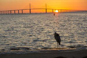 Bird Silhouetted in Front of Bridge by Lynn M. Stone