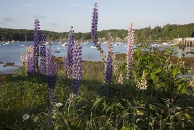 Maine Scenic by Lynn M. Stone