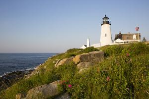 Pemaquid Light and Wild Roses, Pemaquid Point Peninsula, Near New Harbor, Maine, USA by Lynn M. Stone