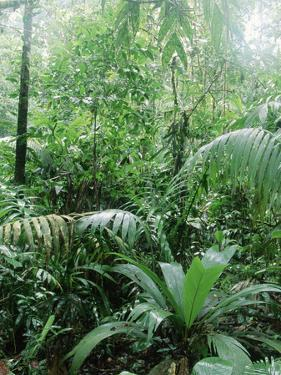 Rain Forest, Costa Rica by Lynn M. Stone