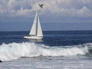 Sailboat on Monterey Bay, California by Lynn M. Stone
