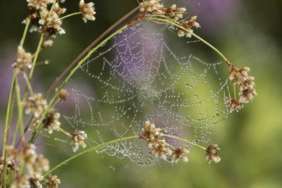 Spider Web by Lynn M. Stone