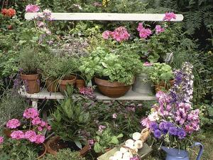 Bench with Herbs: Sage, Parsley Thyme, Rosemary, Dill, Fennel, Basil Sorel, Chives, Tarragon by Lynne Brotchie