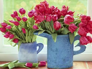 Pink Parrot Tulipa in Blue Vases with Handles, February by Lynne Brotchie