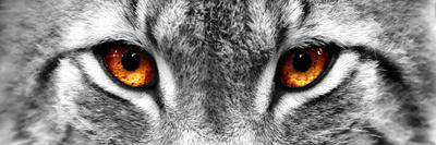 https://imgc.allpostersimages.com/img/posters/lynx_u-L-Q10WAZ40.jpg?p=0