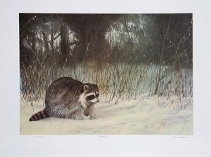 Bandit by M. Barker