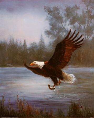 Eagle Fishing by M. Caroselli