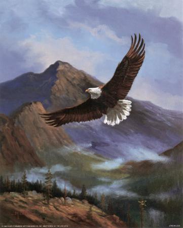 Eagle Gliding by M. Caroselli