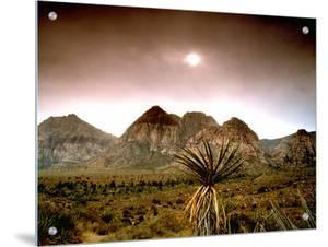 Mojave Desert, Las Vegas, Nevada by M.N.