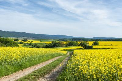 https://imgc.allpostersimages.com/img/posters/m-nchberg-bavaria-germany-scenery-with-rape-fields-in-lower-franconia_u-L-Q11YO6P0.jpg?p=0