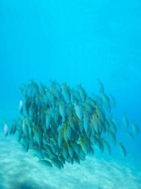 School of Fish Swimming by M Swiet Productions