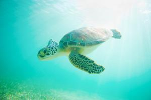 Sea Turtle Baby by M Swiet Productions