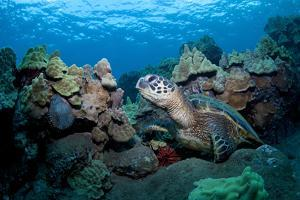 Sea Turtle by M Swiet Productions