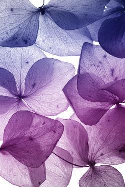 Colorful Flower Petal Closeup by maaram