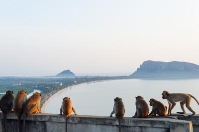 https://imgc.allpostersimages.com/img/posters/macaque-monkey-macaca-khao-chong-krajok-prachuap-kiri-khan-thailand-southeast-asia-asia_u-L-Q12SD5O0.jpg?artPerspective=n