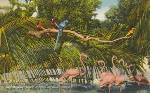 Macaws, Flamingos, Cockatoo, Florida