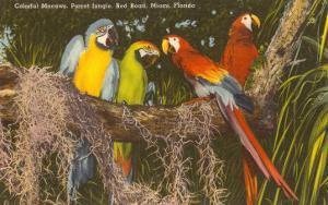 Macaws, Miami, Florida