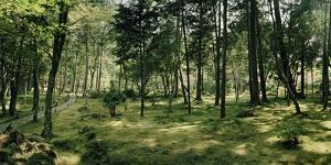 A Grove of Trees at the Gardens at Saihoji Temple by Macduff Everton