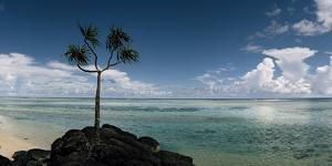 A Lone Tree on the Beach of a Beautiful Blue Lagoon by Macduff Everton