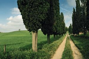 A Narrow Road Through the Tuscan Landscape by Macduff Everton