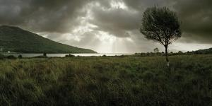 A Solitary Tree Overlooks Loch Na Dal in the Distance by Macduff Everton