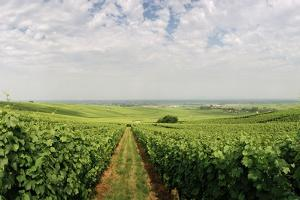 A Vineyard in Alsace, France by Macduff Everton